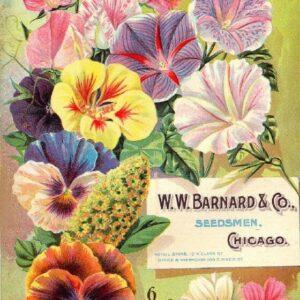 Barnard Vintage Seed Cover Picture Art Print Poster A4 A3 A2 A1
