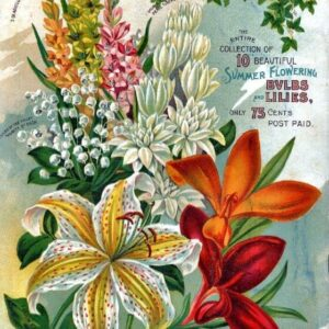 Alneer Back 3 Vintage Seed Cover Picture Art Print Poster A4 A3 A2 A1