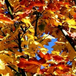 High Detailed Macro Image Of Autum Leaves NAT050 Art Print A4 A3 A2 A1