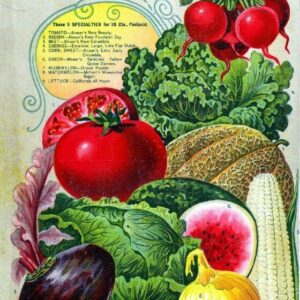 Alneer Back 2 Vintage Seed Cover Picture Art Print Poster A4 A3 A2 A1